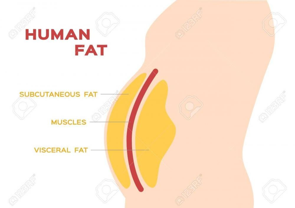 110606844-human-belly-and-abdomen-fat-layer-vector-subcutaneous-and-visceral-fat.thumb.jpg.cf2be41756fa09fc3549608a08c7a1ff.jpg